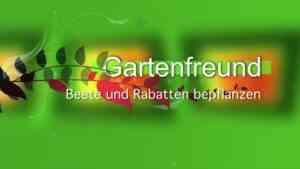 Beete und Rabatten bepflanzen