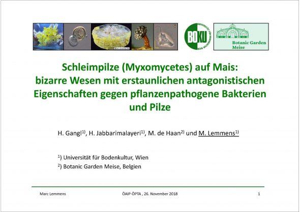 Schleimpilze (Myxomycetes) auf Mais