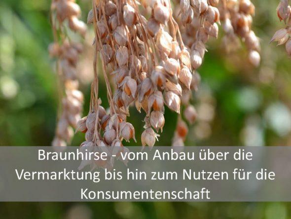Braunhirse – vom Anbau über die Vermarktung