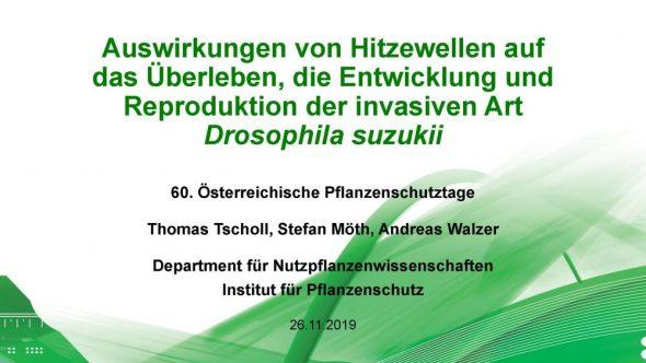 Auswirkungen von Hitzewellen auf das Überleben, die Entwicklung und Reproduktion der invasiven Art Drosophila suzukii