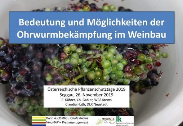Bedeutung und Möglichkeiten der Ohrwurmbekämpfung im Weinbau