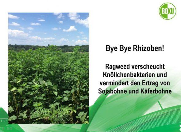 Bye Bye Rhizoben!
