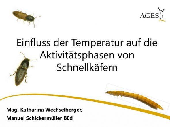 Einfluss der Temperatur auf die Aktivitätsphasen von Schnellkäfern