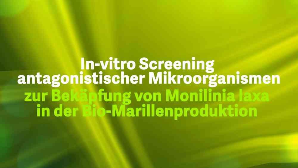 In-vitro Screening von antagonistischer Mikroorganismen