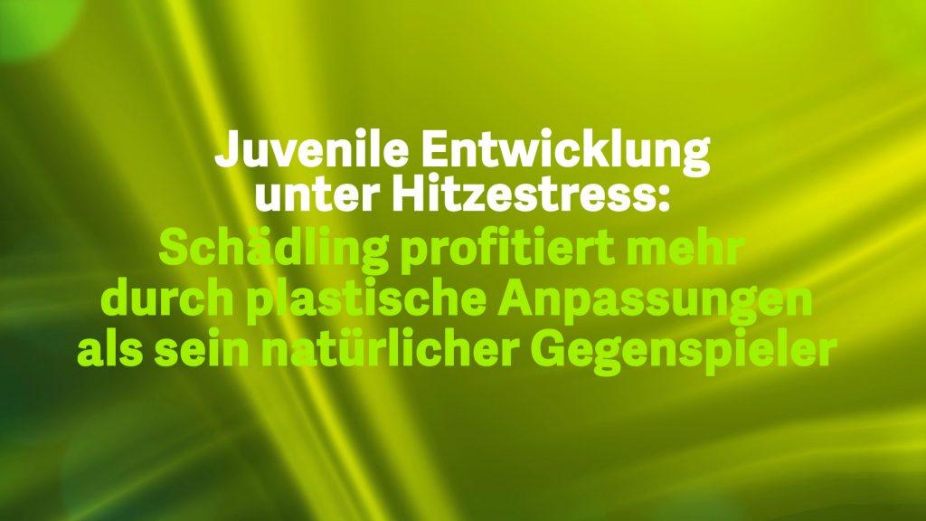 8 Juvenile Entwicklung unter Hitzestress
