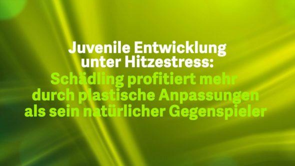 Juvenile Entwicklung unter Hitzestress