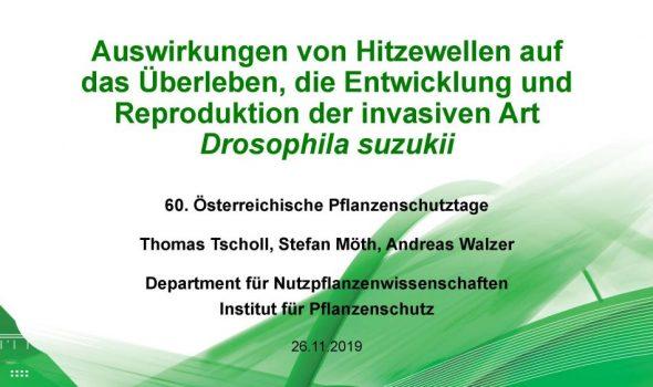 Auswirkungen von Hitzewellen auf das Überleben, die Entwicklung und Reproduktion der invasiven Art Drosophila suzukii_Seite_01