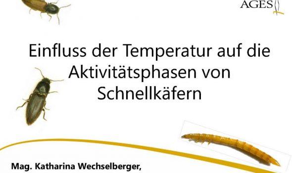 Einfluss der Temperatur auf die Aktivitätsphasen von Schnellkäfern_Seite_01